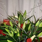 All Lily Christmas Hand Tied